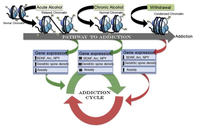 Edition 25 - Intergenerational Effects of Alcoholism, Children of Sober Alcoholics: Brain and Behavioral Risks, Interventions, and Implications