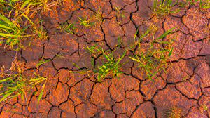 Edition 31 – Climate Change and Neglected Tropical Diseases: The Case in Sudan